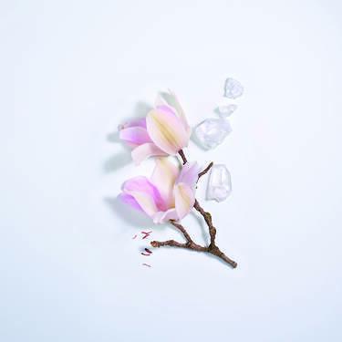 Magnolia Rosae